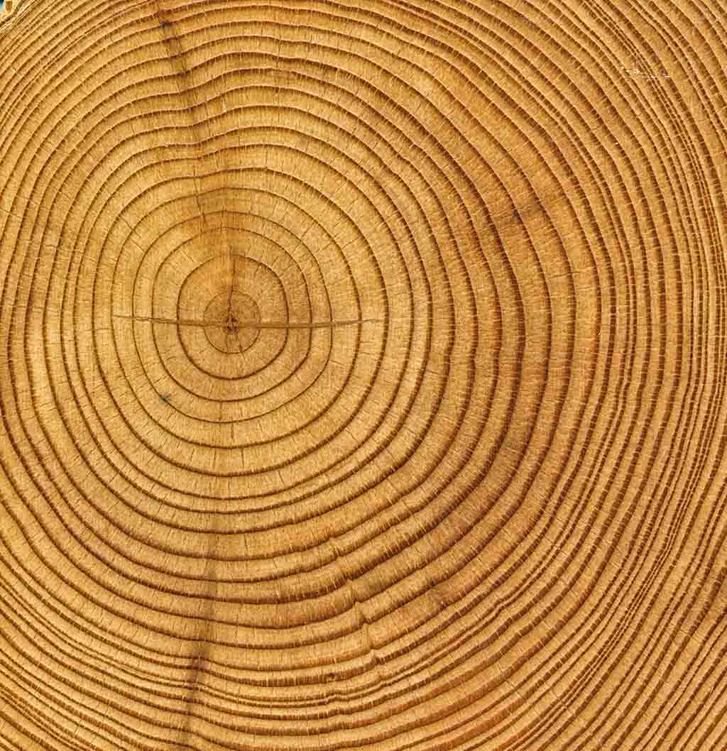 Tree Rings – Journey for Orphaned Youth