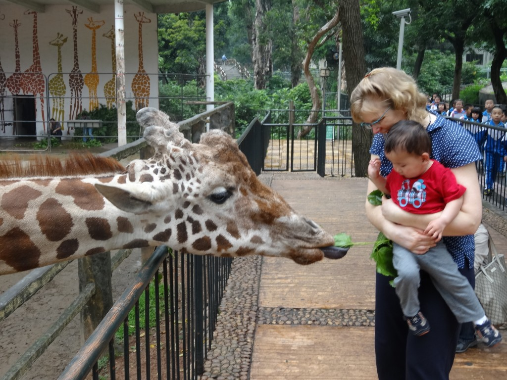 Max and Michelle feeding one of the Giraffes.